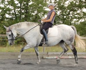 dressage correct low round head carriage
