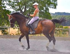 correct suppleness in dressage