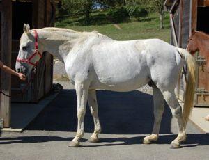stiff horse becomes supple