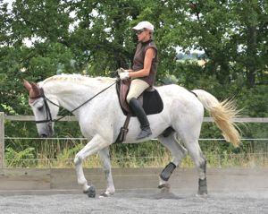 stiff horse rehabilitation