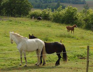 stiff horse regains character