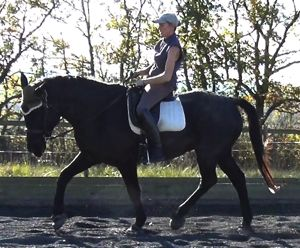 training horses: correct dressage
