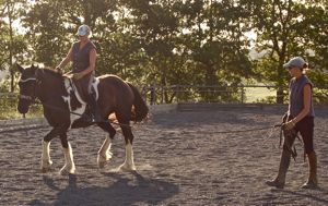 training horses: lungeing a young horse