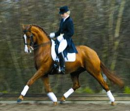 ultimate dressage misconception: balance achieved through holding