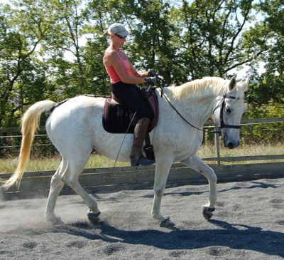 ultimate dressage solution: unity through straightness