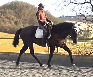 ultimate dressage solution: straightness for resolving bad conformation