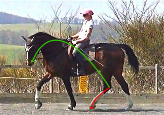 ultimate dressage solution: hindleg propulsion