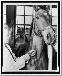 vet injecting horse