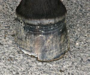Aggressive barefoot trim