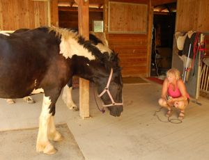 introducing clippers to young horse