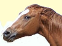 aggressive horse