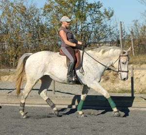 dummy foal becomes dressage horse