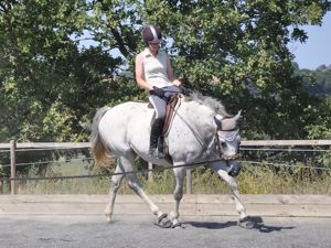 Dummy foal turns into dressage horse