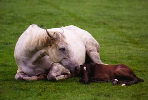 Newborn dummy foal