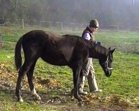 Leading a Foal