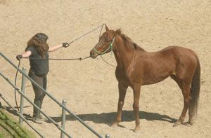 natural horsemanship resistance
