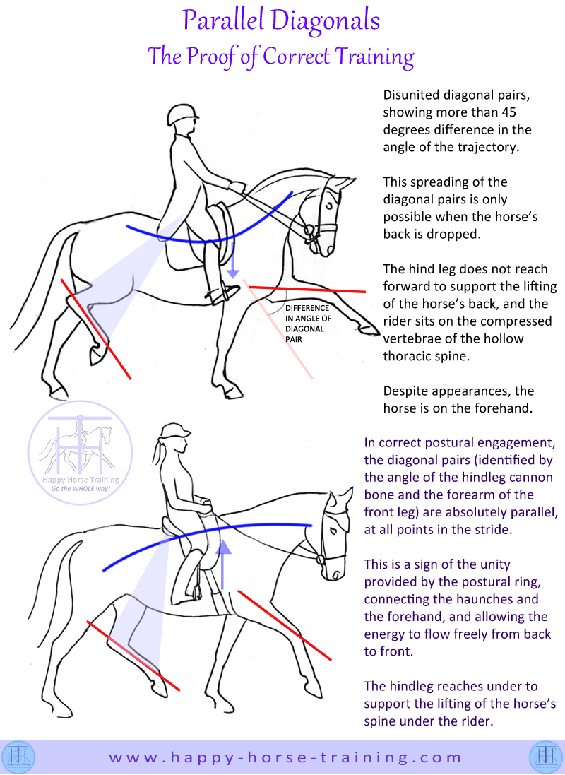 Gymnastic riding preserves the purity of the gaits instead of prioritising spectacular appearances