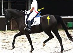 deep-seated dressage saddle supporting the hollow seat