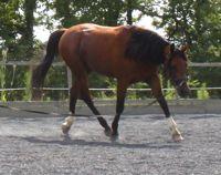 equine back problems: correct preparation
