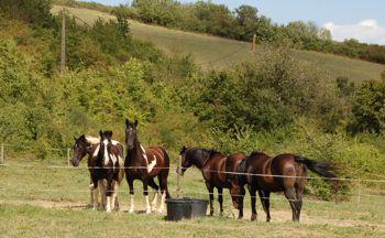 rescue horse happy with herd