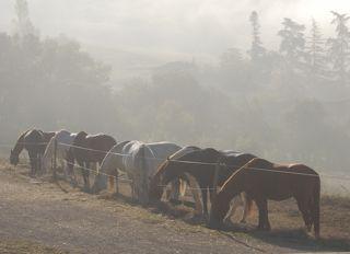 feedtime paddock paradise