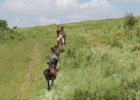 horses enjoying their Paddock Paradise