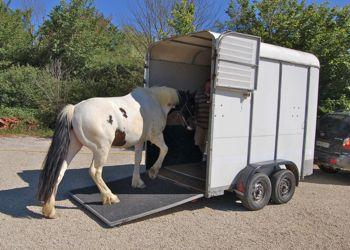 loading a horse