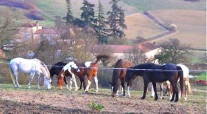herd behavior: a happy horse group