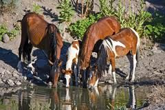 herd dynamics water hole