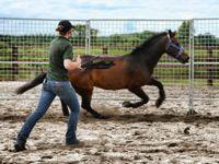 holistic horse keeping: training