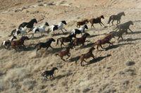 holistic horse keeping: freedom and sociability
