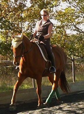 holistic horse keeping: work in harmony