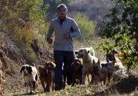 Cesar Millan's innate understanding of dog behavior