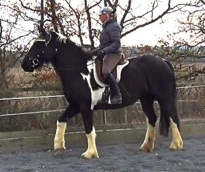 allowing a horses to evaluate threat