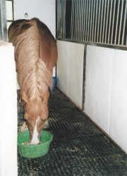 fieldguard horse rubber mats with wall mats