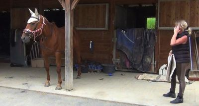 Healing horse trauma step 3