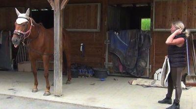 Healing horse trauma step 4