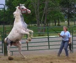 horse trauma: dangerous behavior