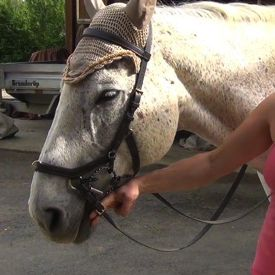 how to bridle a horse: step 7