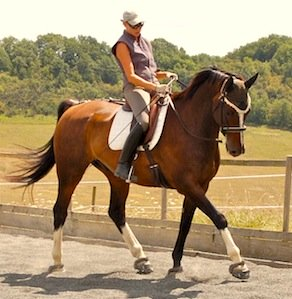 How To Ride A Horse In Balance: The Gymnastic Rider