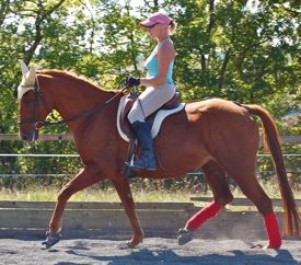 Horse using the same ring of engagement under saddle as in correct lunging