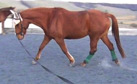 Lunging a horse demonstrates exactly the same biomechanical dynamics of engagement as riding involves