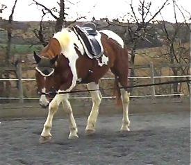 Good lunging is beneficial for horses at all stages of work