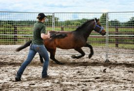 Tension-inducing practices to gain rapid submission of the horse