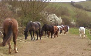 main horse herd