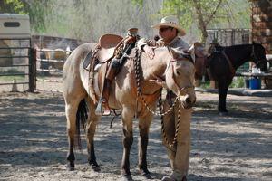 Mark Rashid with horse