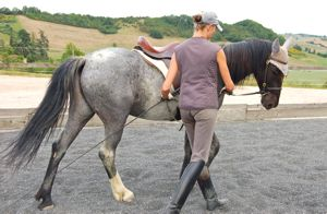 natural horse training correct yielding in-hand