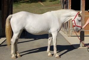Octavia: an aggressive horse rescued