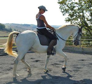 rescue horse success