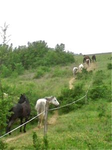 Horses moving round their Paddock Paradise